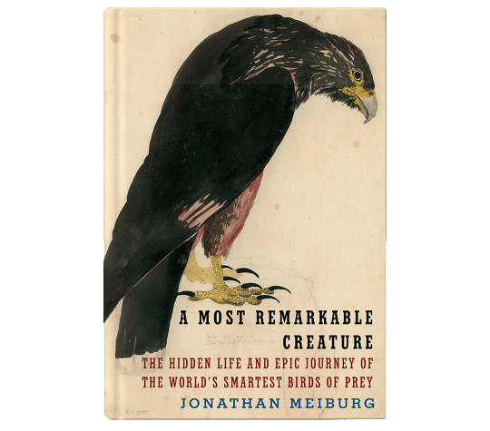 A Most Remarkable Creature bookcover